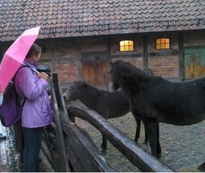 Ponnykraulen