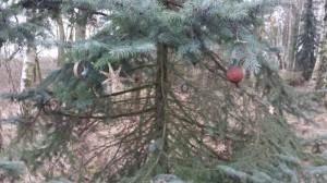 Jultanne und Knödel
